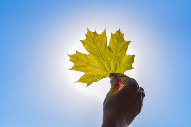 Feuille d'érable orange automne tenue en main contre le ciel bleu