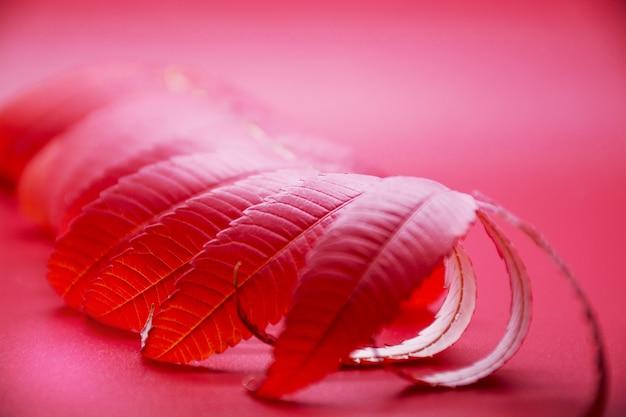 Feuille d'érable rouge coloré d'automne sur fond rouge