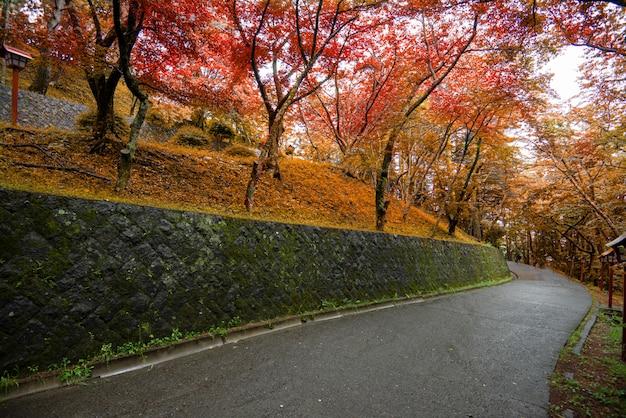 Feuille d'érable rouge coloré automne