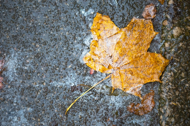 Une feuille d'érable tombée à sec jaune a gelé dans la glace sur l'asphalte. les premières gelées d'automne, octobre, novembre. feuille gelée dans la glace, gros plan
