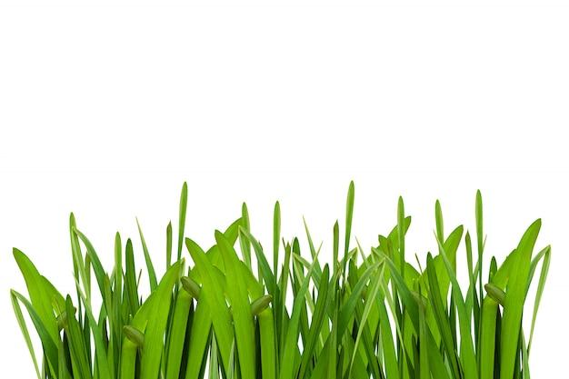 Feuille de fleur verte isolée sur fond blanc.