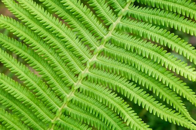 Feuille de fougère fraîche macro close-up de belle texture