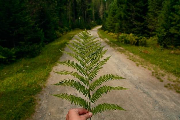 Feuille de fougère sur une route forestière