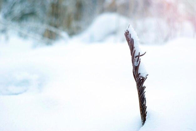 Feuille de fougère tordue à sec qui sort de sous la neige, gros plan sur un arrière-plan flou de neige