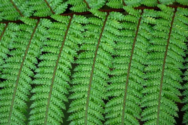Feuille de fougère verte de près