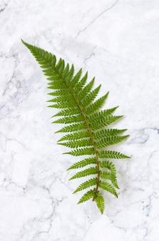 Feuille de fougère verte sur table en marbre blanc avec vue de dessus de l'espace négatif
