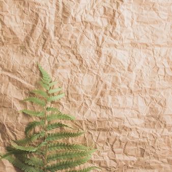 Feuille de fougère verte sur la texture du papier craft marron froissé. espace copie gratuit, vue de dessus.