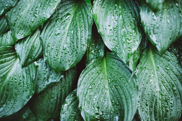 Feuille humide après la pluie