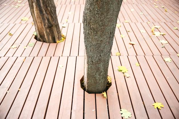 Feuille jaune allongée sur le fond en bois. arbre qui pousse à travers le sol. photo d'automne. textures naturelles.