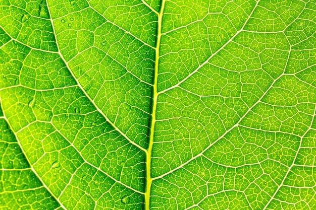 Feuille de macro vertefond de feuilles vertes