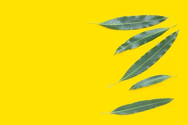Feuille de mangue sur fond jaune.