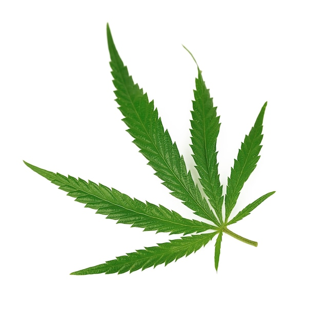 Feuille de marijuana sur isolated on white