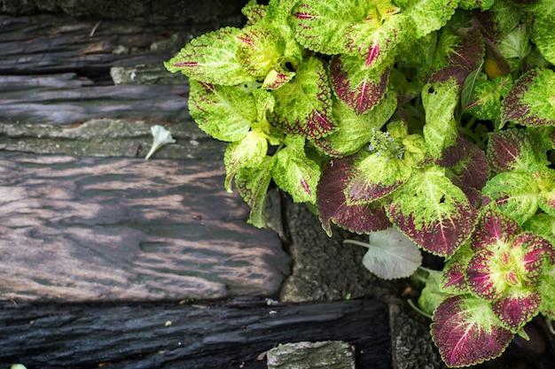 Feuille de menthe verte et bois humide sur jardin