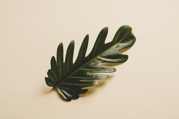 Feuille de monstera dans une table marron, style minimal