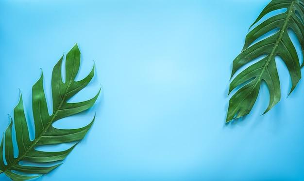 Feuille de monstera tropical vert sur fond bleu