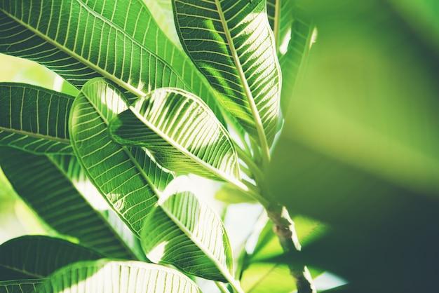 Feuille de nature abstraite verte