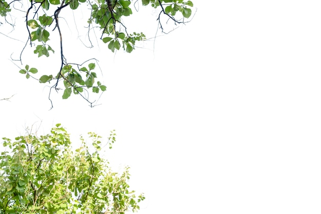 Feuille de nature avec espace libre
