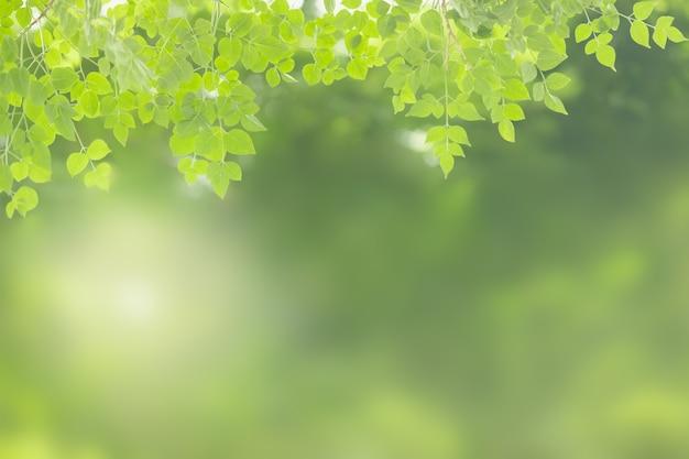 Feuille de nature verte sur fond de verdure floue avec espace de copie.