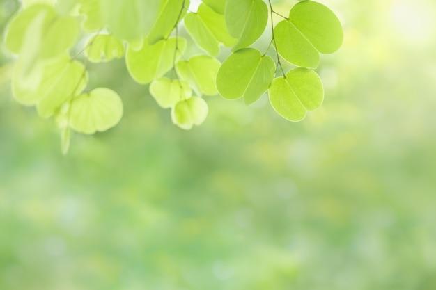Feuille de nature vue vert sur fond de verdure floue sous la lumière du soleil avec espace bokeh et copie.