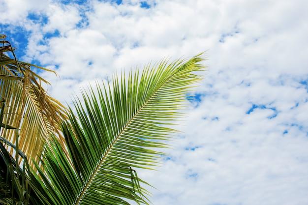 Feuille de noix de coco en été.