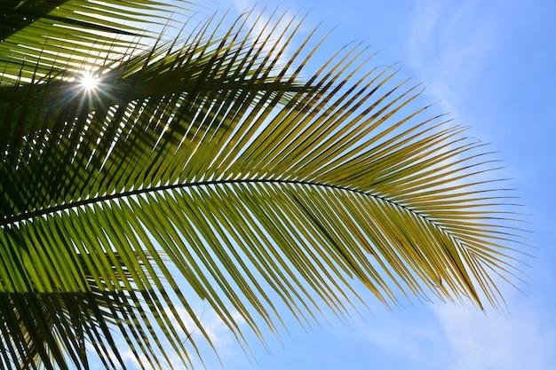 Feuille de noix de coco verte avec fond de ciel