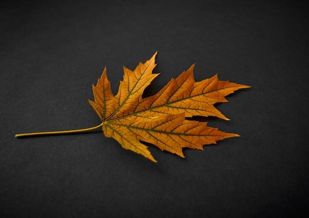Feuille orange d'automne sur fond noir