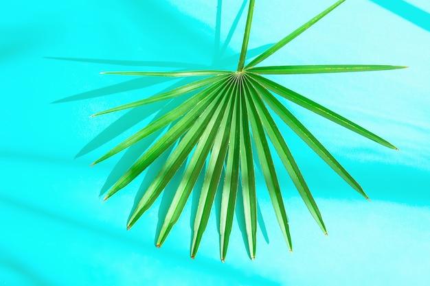 Feuille de palmier épineuse ronde sur fond bleu clair