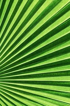 Feuille de palmier en éventail du vanuatu avec des lignes diagonales