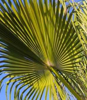 Feuille de palmier sur fond de ciel bleu
