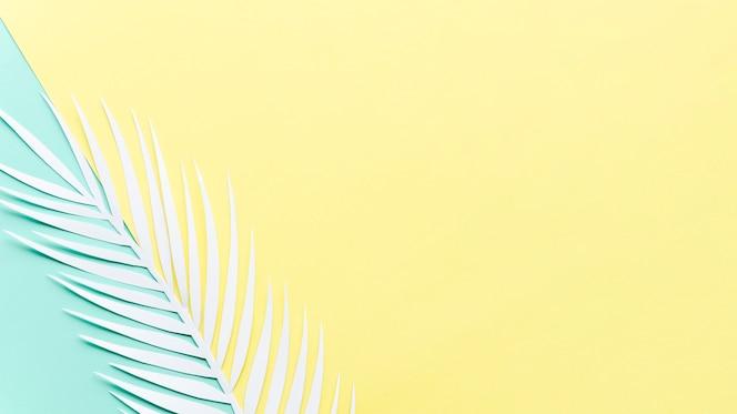 Feuille de palmier en papier sur une table lumineuse