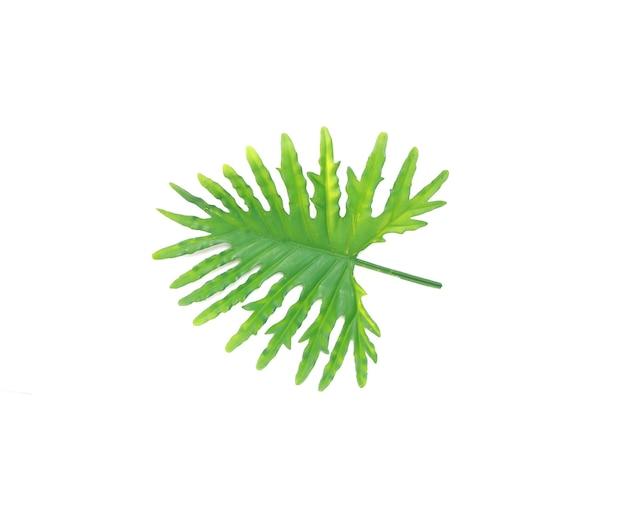 Feuille de palmier philodendron tropical