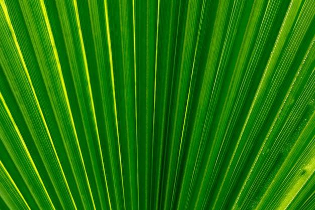 Feuille de palmier se bouchent