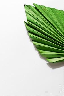 Feuille de palmier sèche sur fond de papier blanc avec espace copie