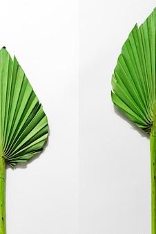 Feuille de palmier sèche sur papier blanc