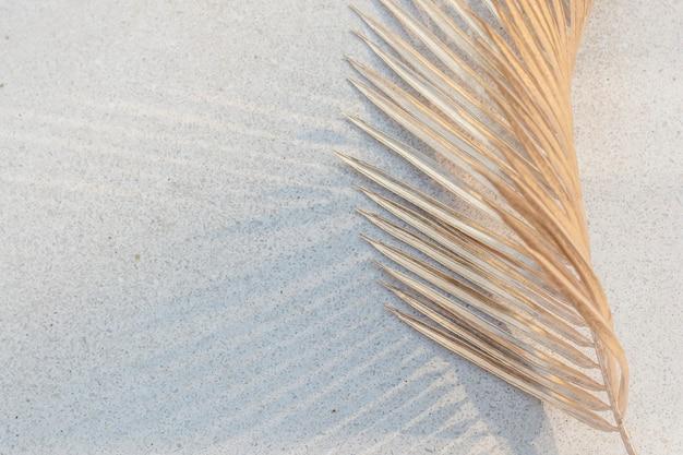 Feuille de palmier séchée sur fond de mur de béton blanc