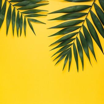 Feuille de palmier tropical sur fond jaune. concept de l'été. lay plat, vue de dessus, espace de copie