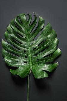 Feuille de palmier tropical monstera sur fond noir. modèle abstrait pour la conception.