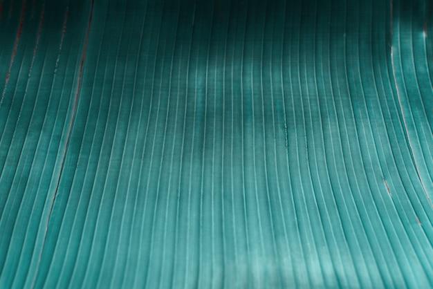 Feuille de palmier tropical turquoise.