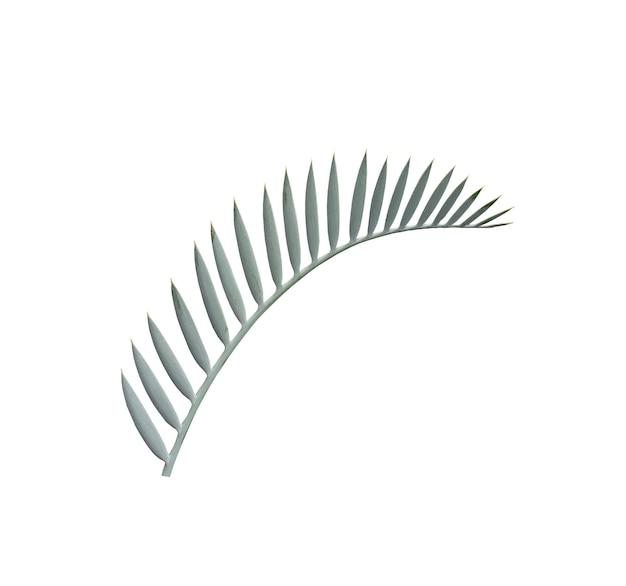 Feuille de palmier vert isolé sur blanc avec un tracé de détourage