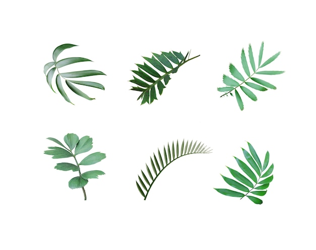 Feuille de palmier vert isolé sur blanc avec