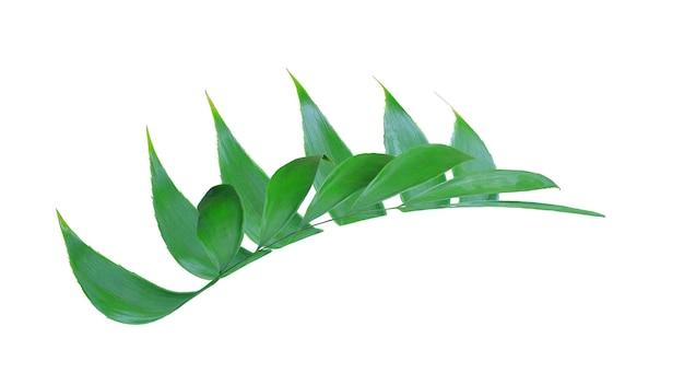 Feuille de palmier vert isolé sur blanc