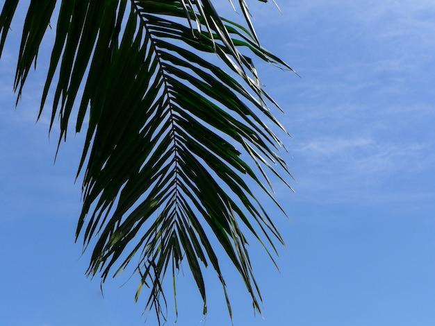 Feuille de palmier vert isolé sur ciel bleu