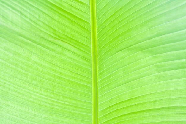 Feuille de palmier vert luxuriant. arrière-plan ou texture