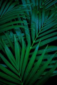 Feuille de palmier vert tropical et ombre abstrait naturel ton sombre