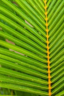 Feuille de palmier vert