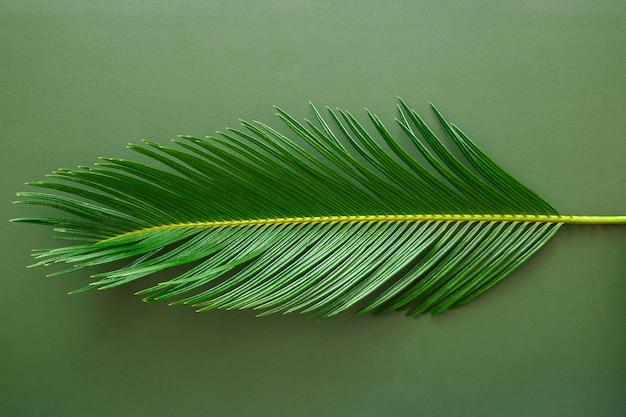 La feuille de palmier verte se trouve sur un fond de texture de cuir vert. feuille de palmier monochrome dans un style minimal. texture de la peau et palmier végétal botanique tropical. vue de dessus.