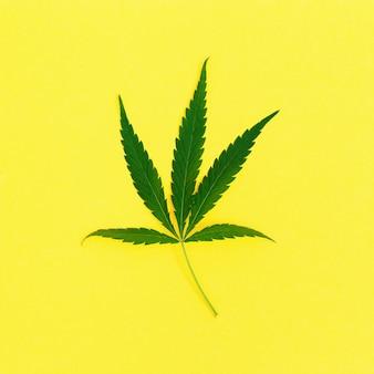 Une feuille de plante de cannabis sur papier jaune ingrédients naturels verts pour les produits cosmétiques