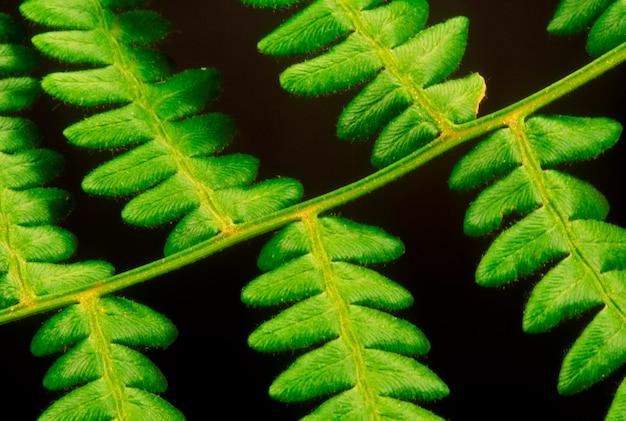 Feuille de plante ornementale
