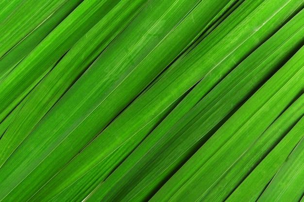 Feuille rayée verte pour fleurs d'iris