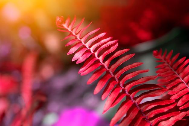 Feuille rose sur le concept de fond de verdure floue